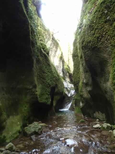 Ruisseau des Carmes (partie finale)
