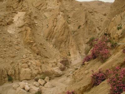 Wadi Weida'a